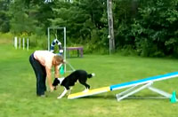 Thrill - Teeter at 8 Months Old
